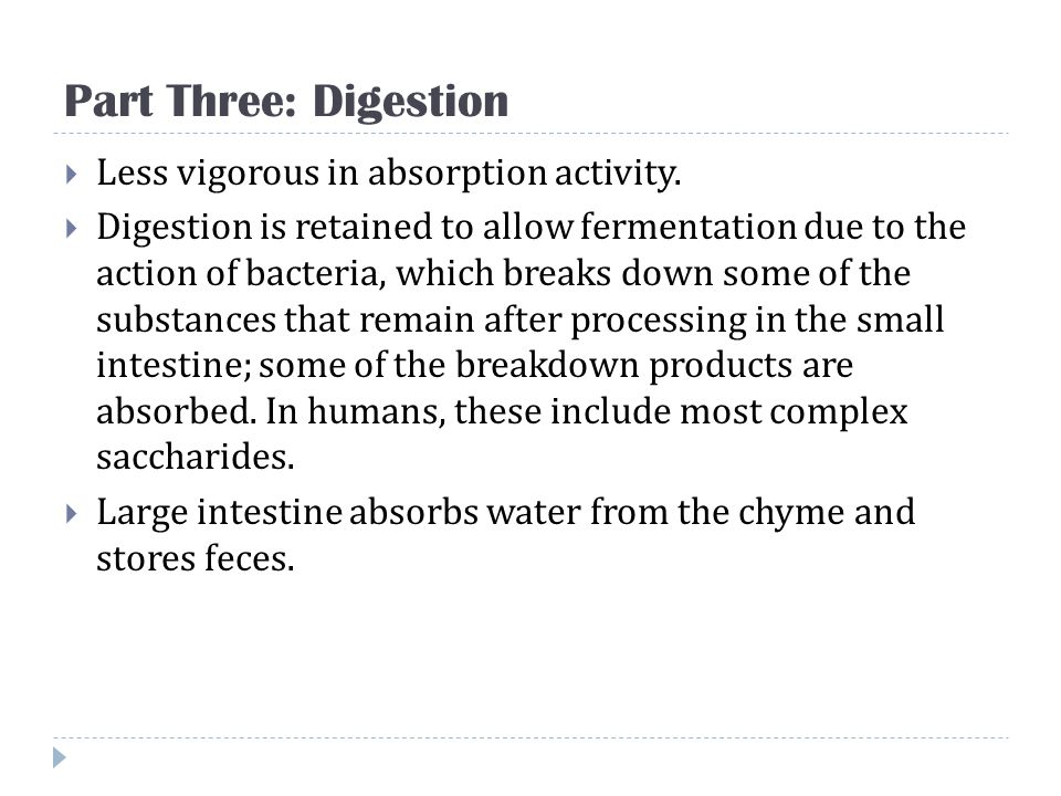 Part Three: Digestion Less vigorous in absorption activity.