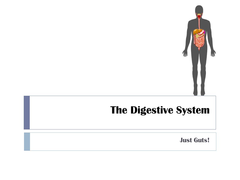 The Digestive System Just Guts!
