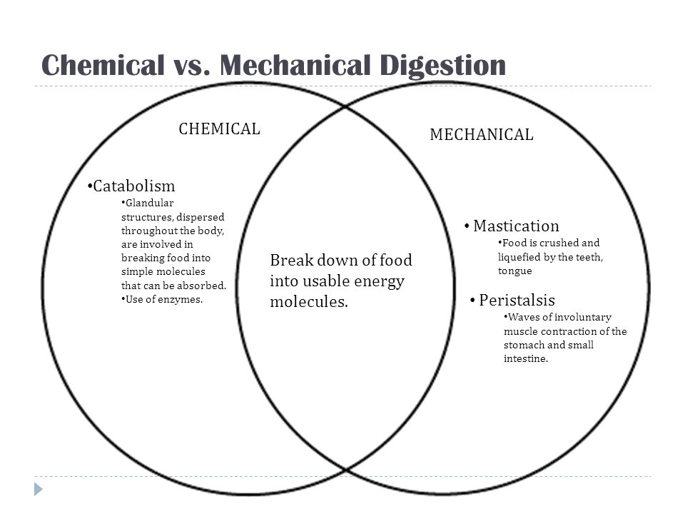 Chemical vs. Mechanical Digestion