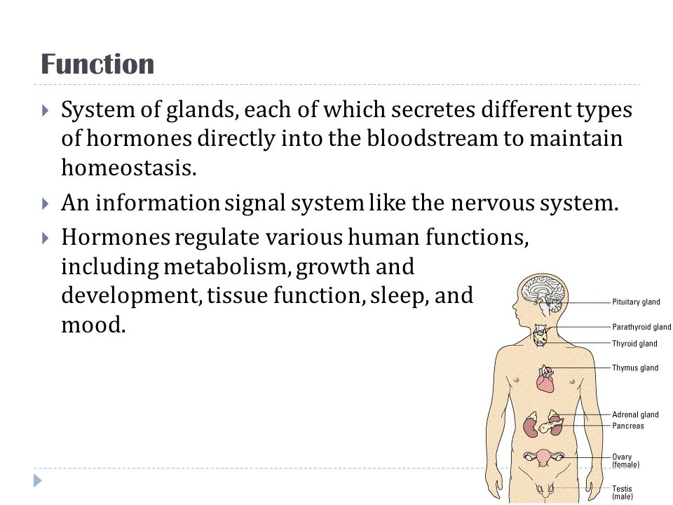 Function System of glands, each of which secretes different types of hormones directly into the bloodstream to maintain homeostasis.