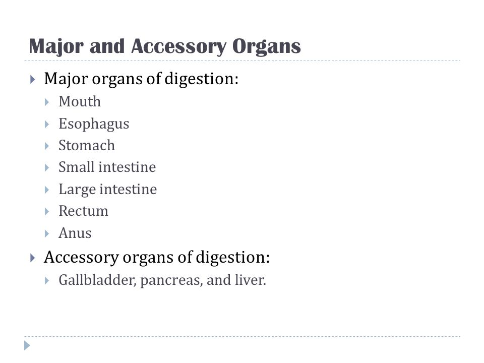 Major and Accessory Organs