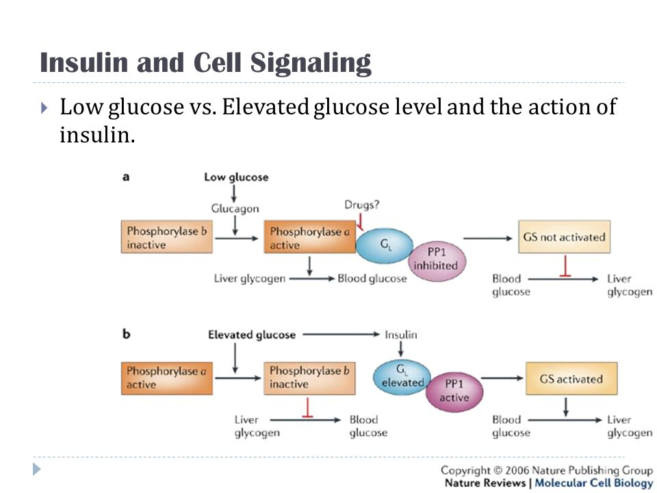 Insulin and Cell Signaling