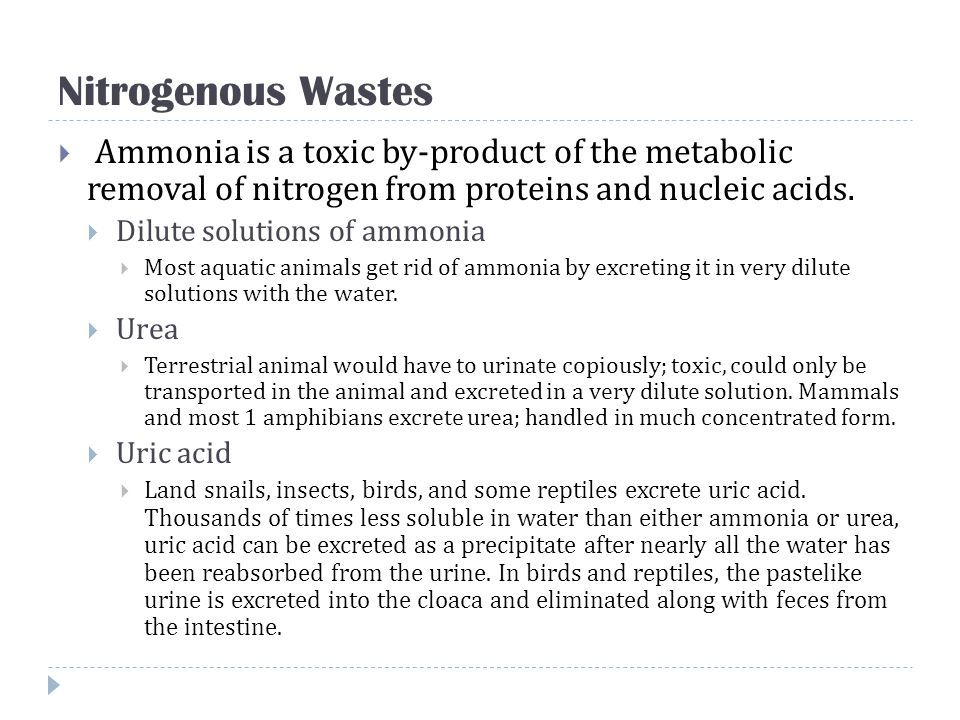 Nitrogenous Wastes Ammonia is a toxic by-product of the metabolic removal of nitrogen from proteins and nucleic acids.