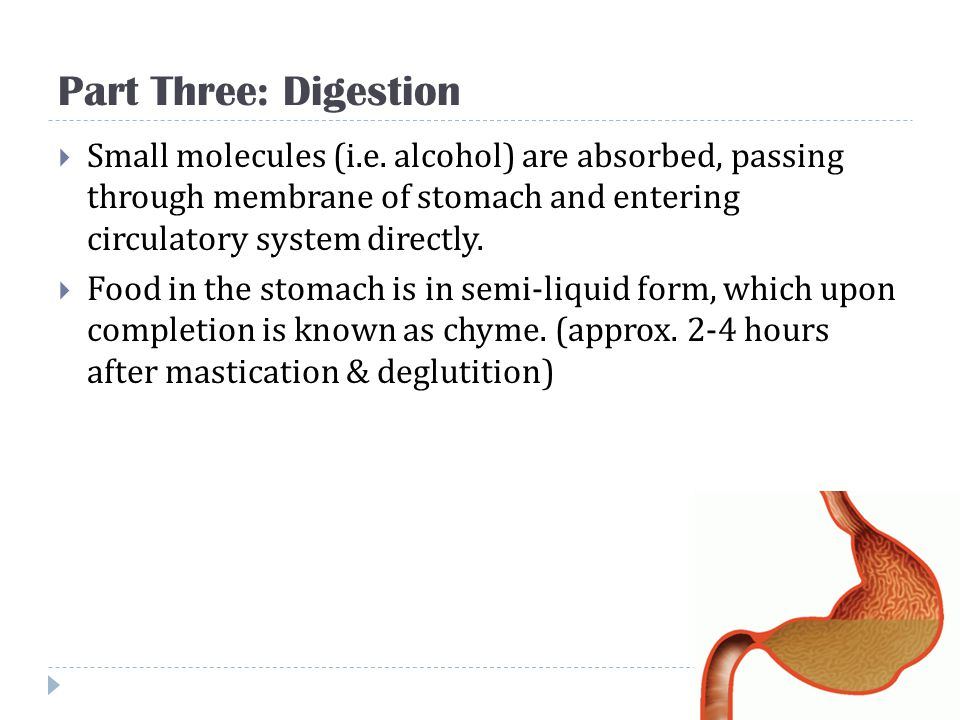 Part Three: Digestion Small molecules (i.e. alcohol) are absorbed, passing through membrane of stomach and entering circulatory system directly.