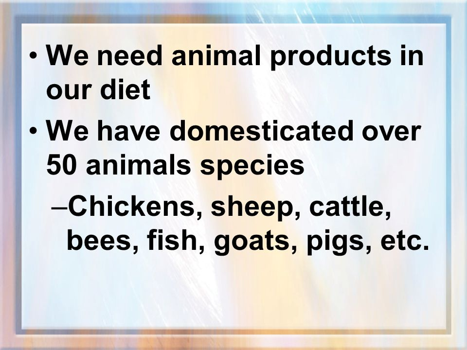 We need animal products in our diet