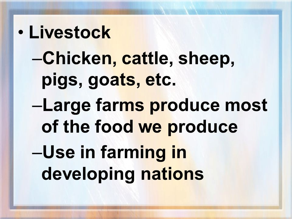 Livestock Chicken, cattle, sheep, pigs, goats, etc. Large farms produce most of the food we produce.