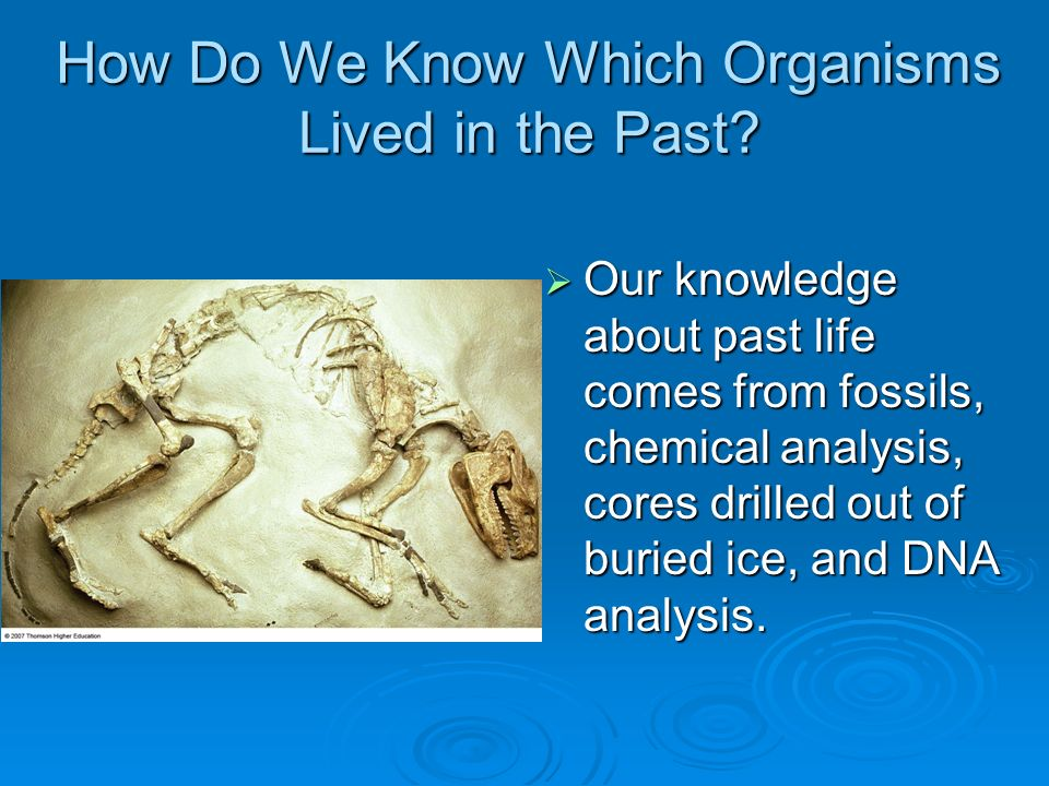 an analysis of the evolution of organisms Evolution of living organisms: evidence for a new theory of transformation discusses traditional interpretations of evolution with a new assumption the book presents a rational and general account of real evolutionary phenomena based on paleontology and molecular biological data.