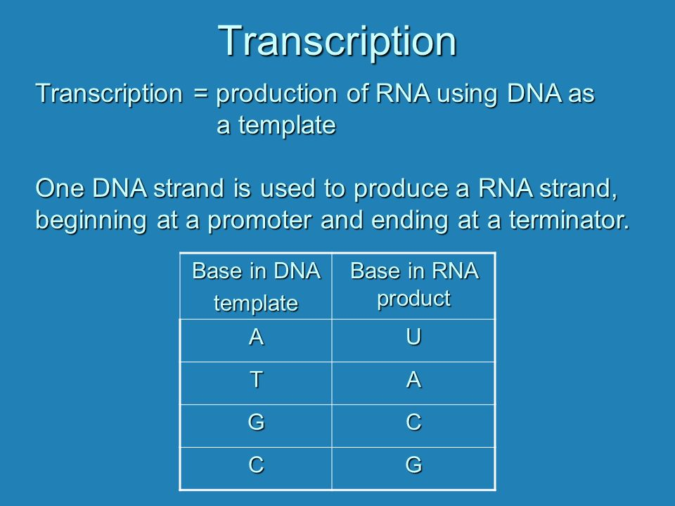 Transcription how the information in dna is used to produce rna in transcription transcription production of rna using dna as a template pronofoot35fo Choice Image