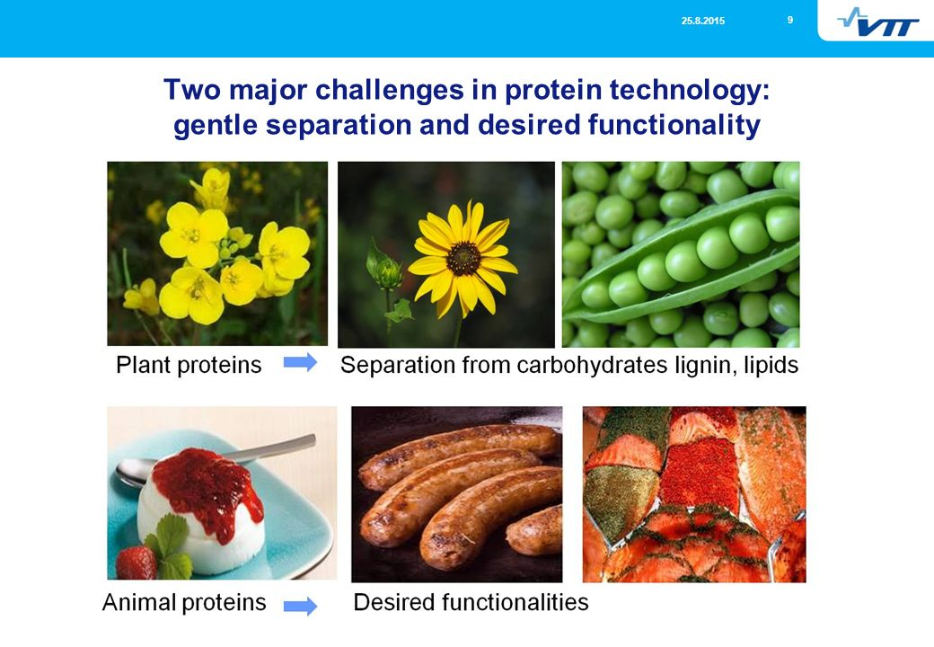 functionality of proteins in food pdf