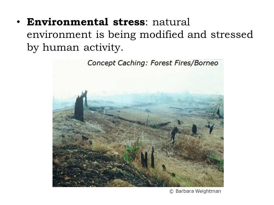 Environmental stress: natural environment is being modified and stressed by human activity.