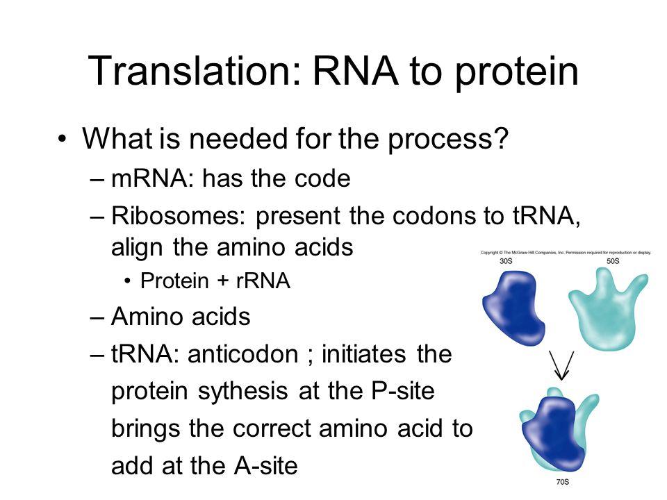 translation of mrna to protein pdf