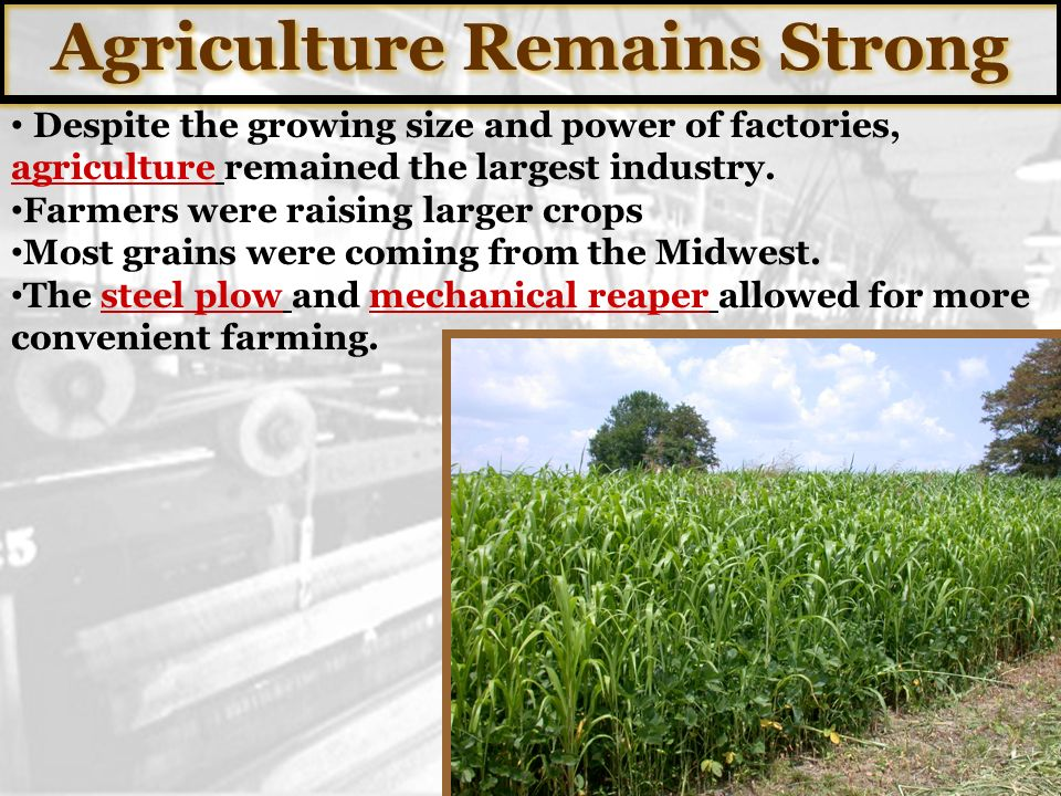 Agriculture Remains Strong