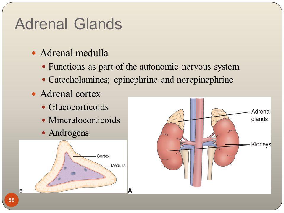 steroid hormones bind to