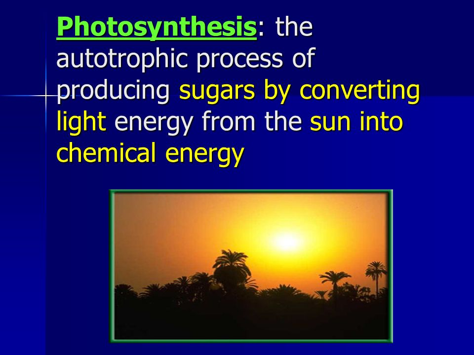 8 Photosynthesis The Autotrophic Process Of Producing Sugars By Converting Light Energy From Sun Into Chemical