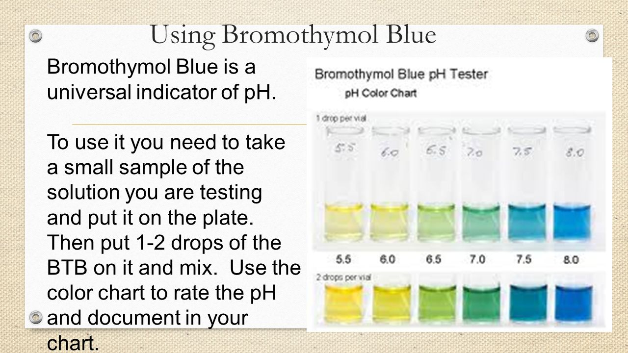 How do humans impact our oceans ppt video online download 18 using bromothymol blue nvjuhfo Images