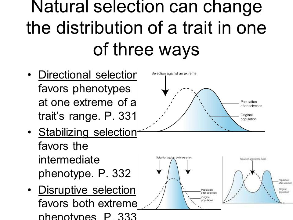 Natural Selection That Favors An Intermediate Phenotype Is