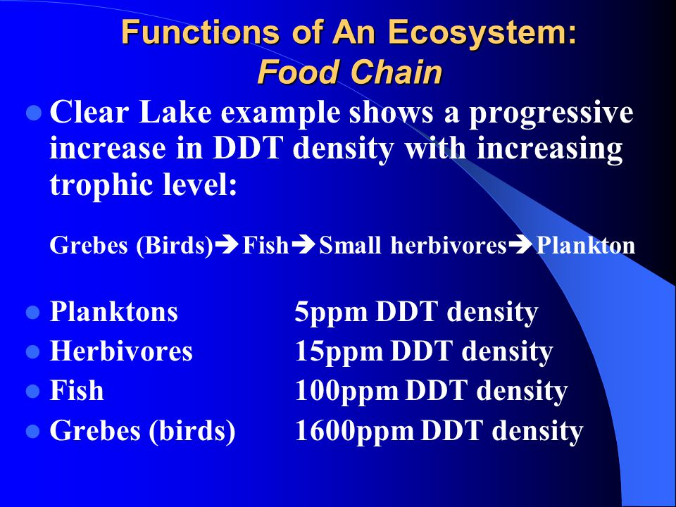 Functions Of An Ecosystem A Food Chain on Food Chain Energy Flow Through