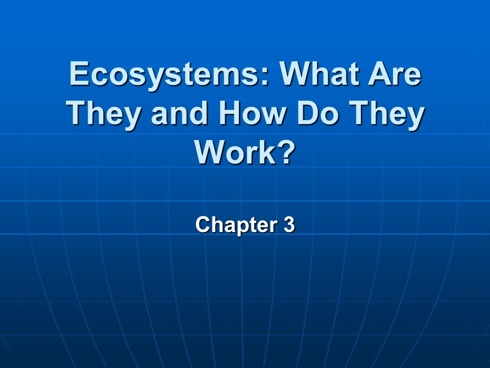 How Does an Ecosystem Work?