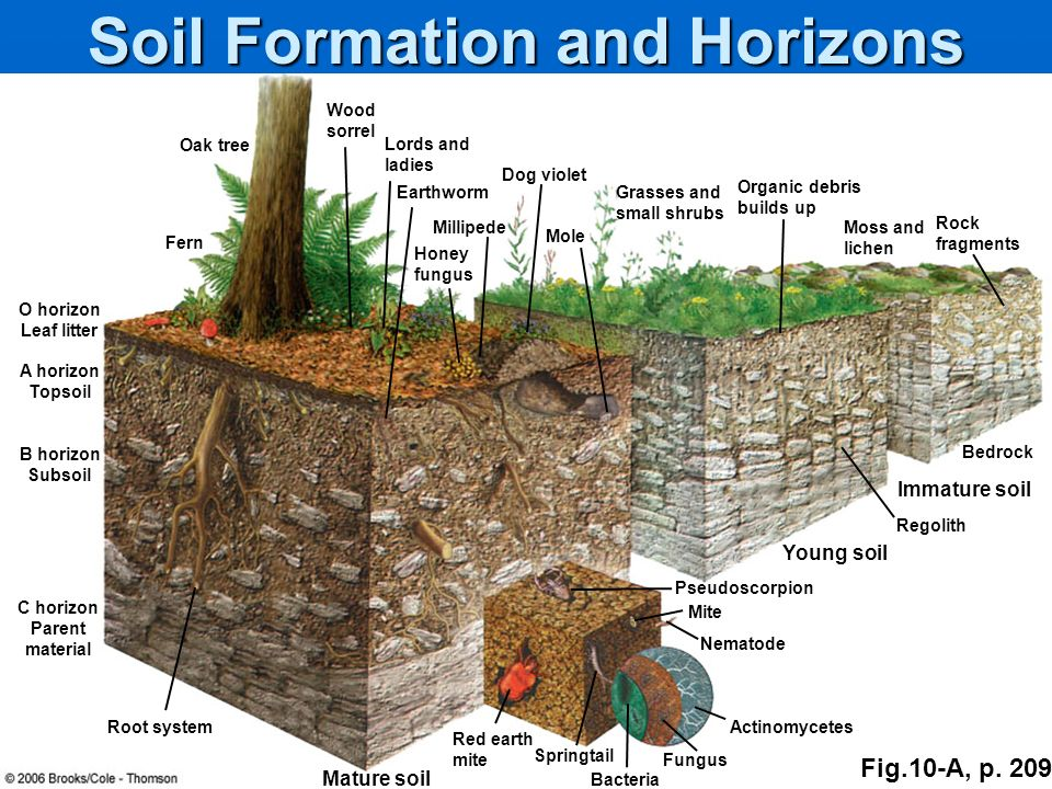 Ecosystems what are they and how do they work ppt for Soil formation
