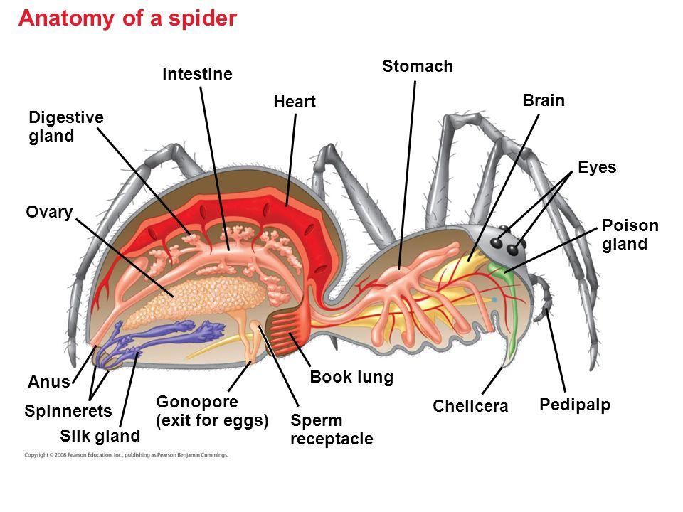 rg chapter 33 invertebrates