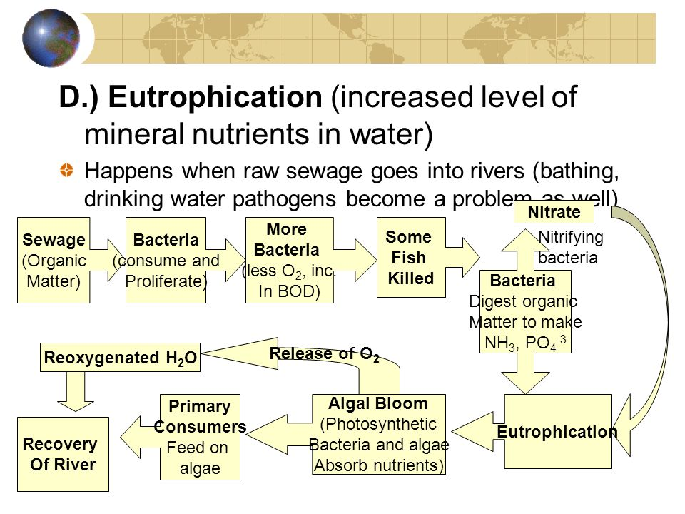 D.) Eutrophication (increased level of mineral nutrients in water)