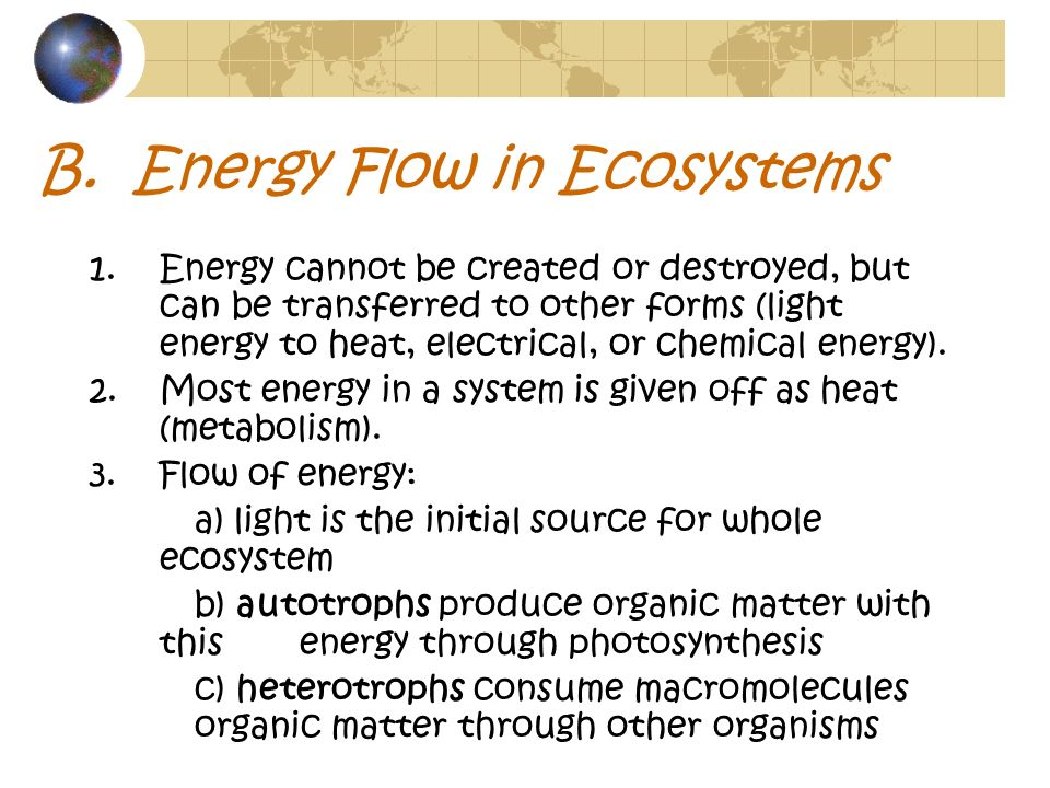 B. Energy Flow in Ecosystems
