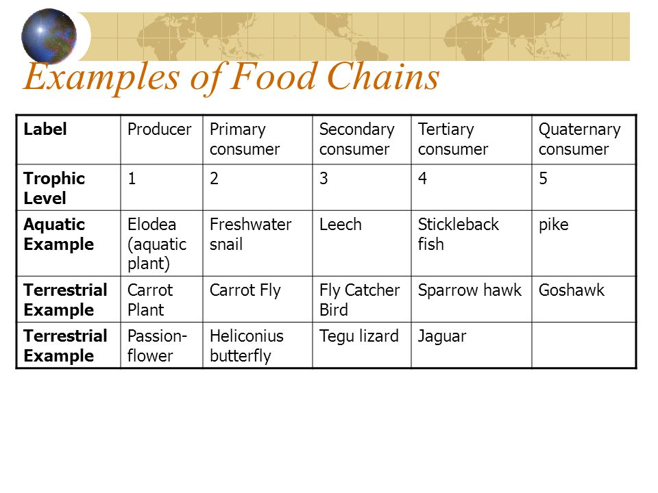 Examples of Food Chains