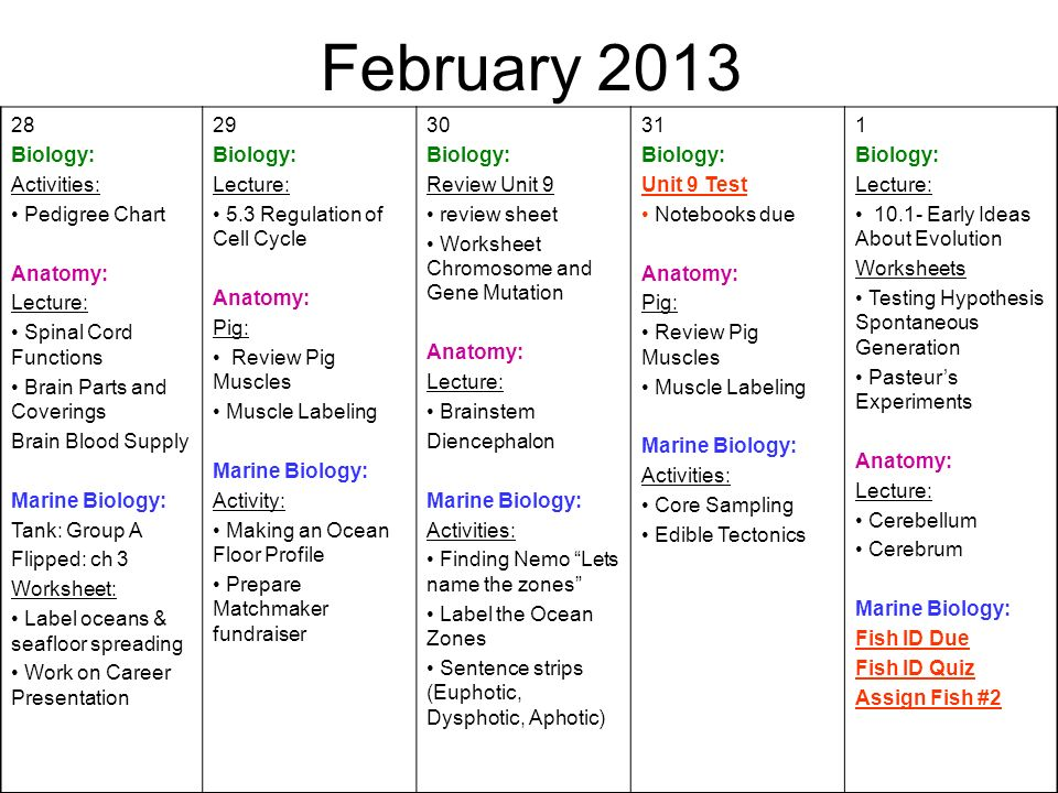 February Biology: Activities: Pedigree Chart Anatomy: Lecture: