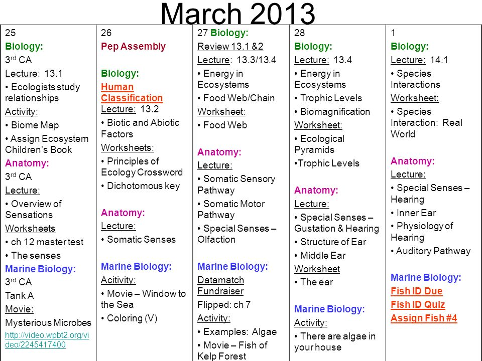 March Biology: 3rd CA Lecture: 13.1