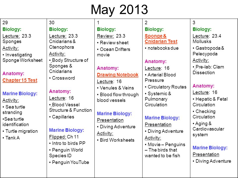 May Biology: Lecture: 23.3 Sponges Activity: