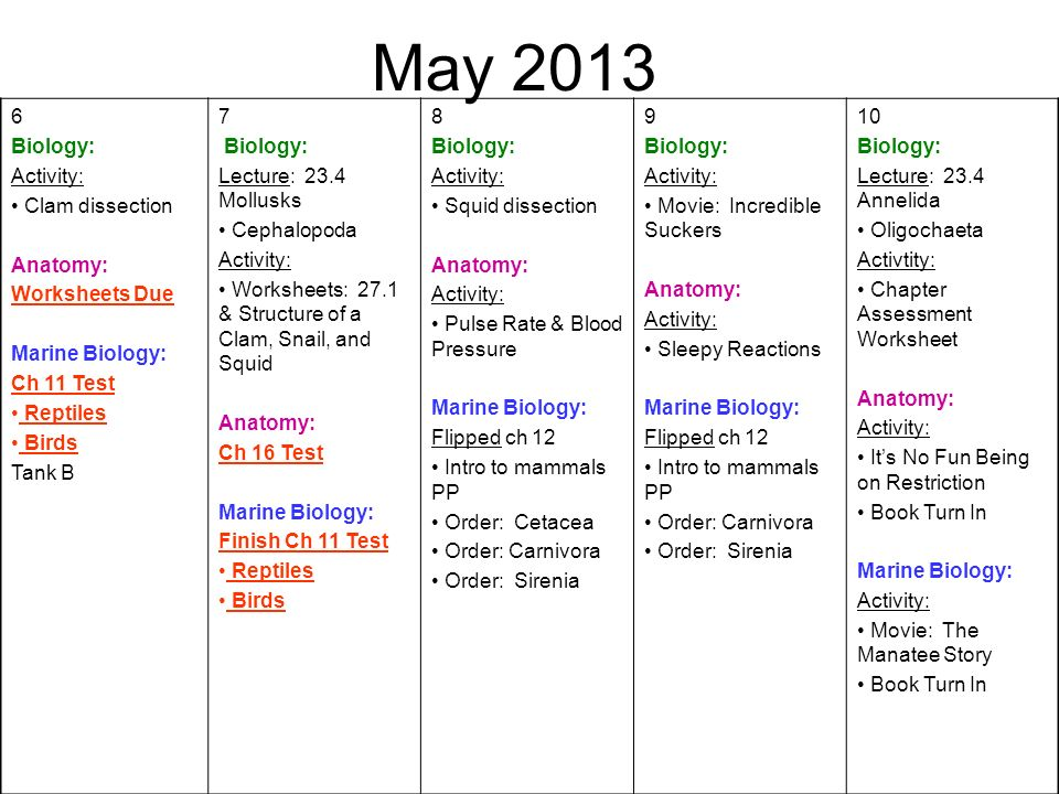 May Biology: Activity: Clam dissection Anatomy: Worksheets Due