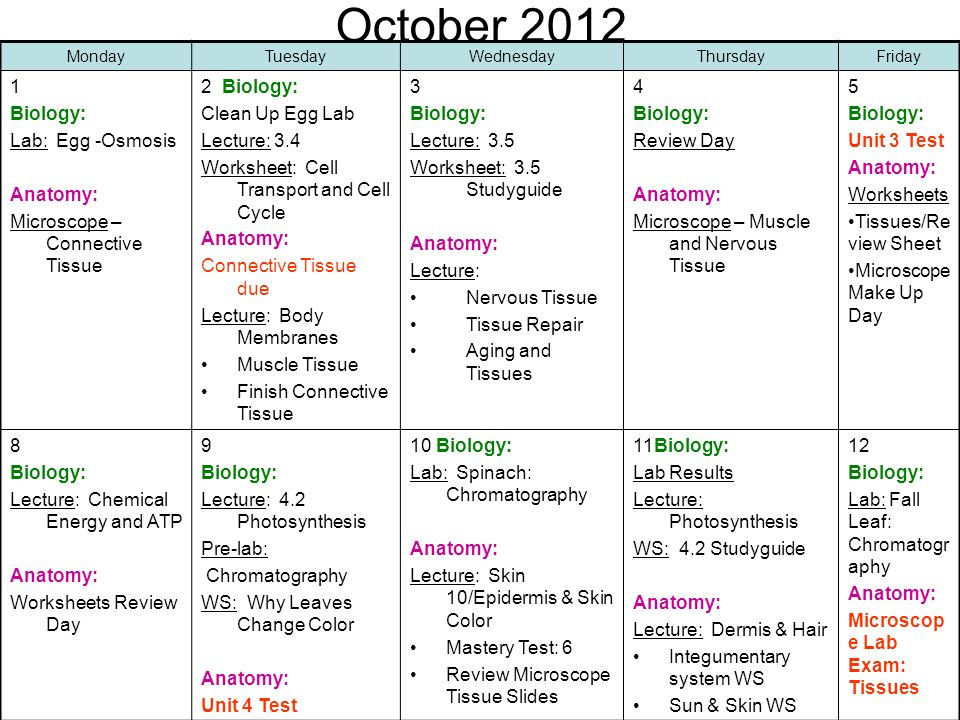 October Biology: Lab: Egg -Osmosis Anatomy: