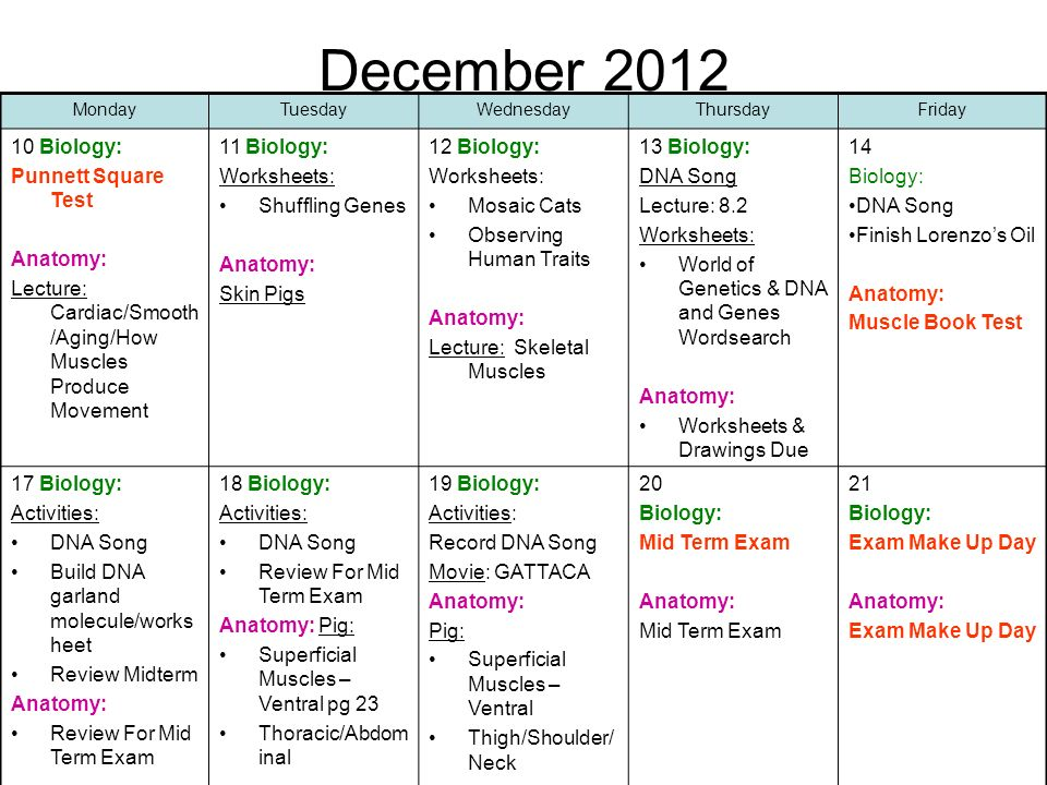 December Biology: Punnett Square Test Anatomy: