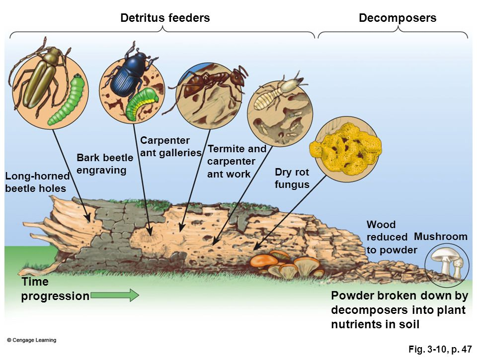 Captivating Detritus Feeders. Ecosystems What Are They And How Do They Work Ppt Video  Online .