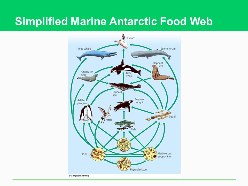 Ecosystems what are they and how do they work ppt for Antarctic cuisine