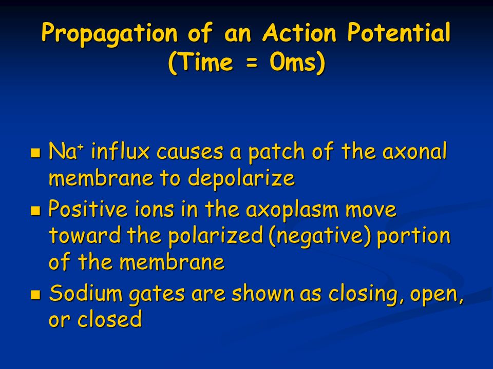 Propagation of an Action Potential (Time = 0ms)
