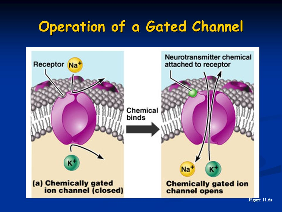 Operation of a Gated Channel