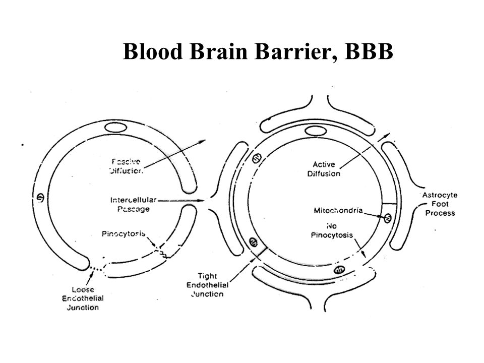 Blood Brain Barrier, BBB