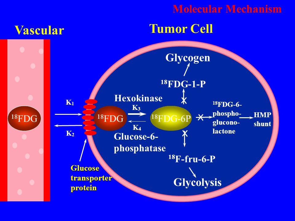 Tumor Cell Vascular Molecular Mechanism Glycogen Glycolysis 18FDG-1-P