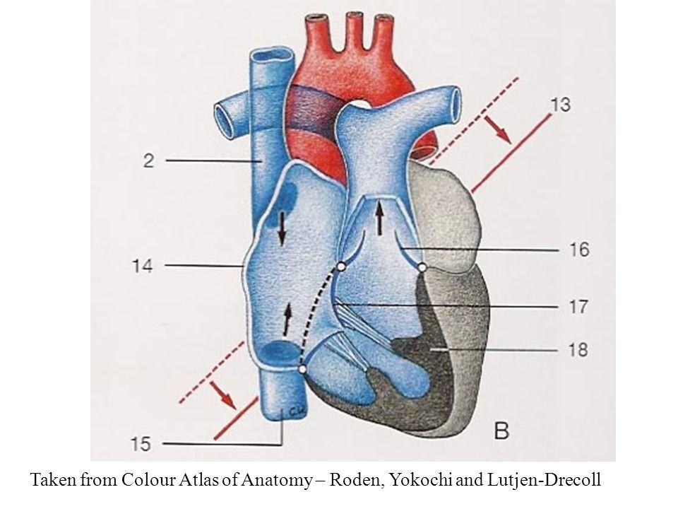 Color atlas of anatomy yokochi download firefox