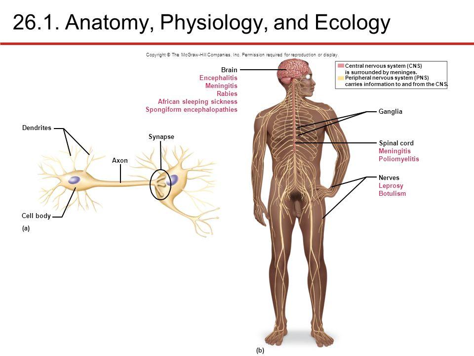 Niedlich Anatomy And Physiology Information Zeitgenössisch ...