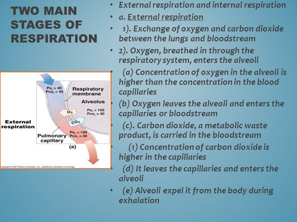 Two main stages of respiration