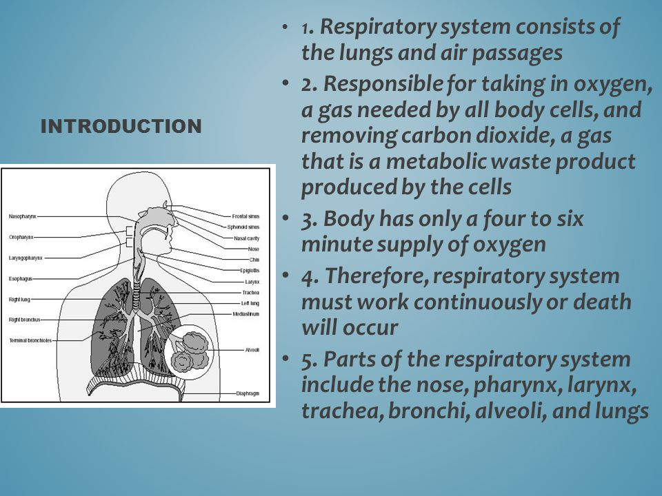 3. Body has only a four to six minute supply of oxygen