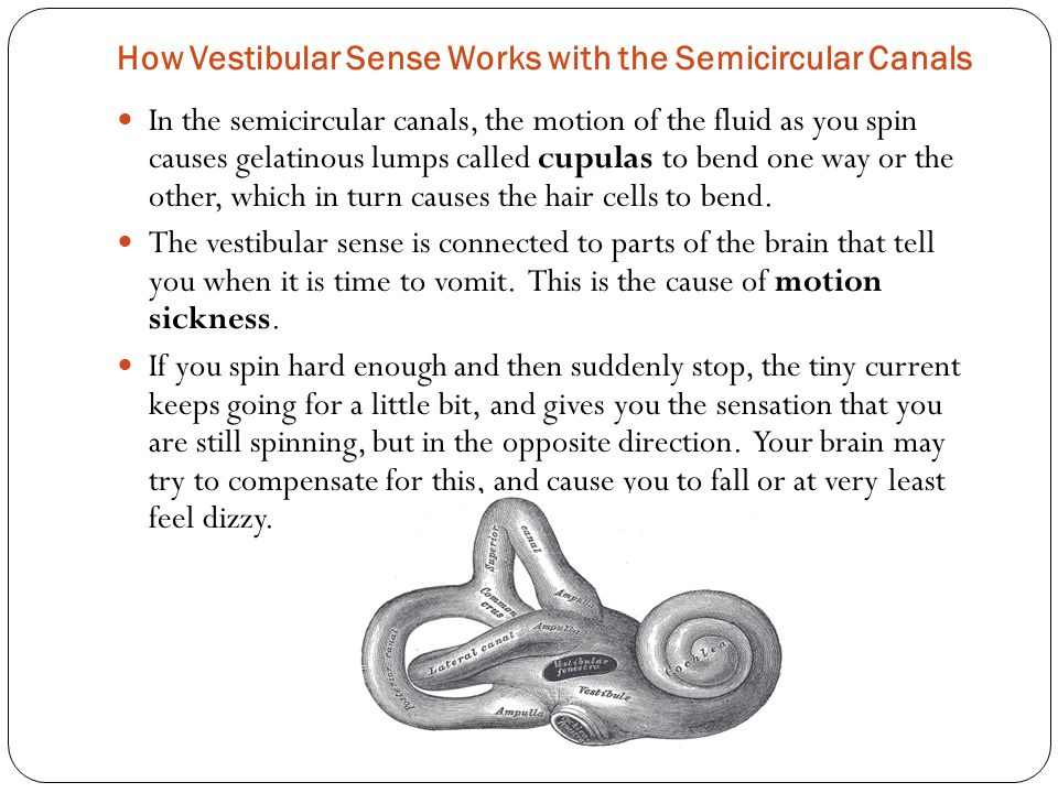 How Vestibular Sense Works with the Semicircular Canals