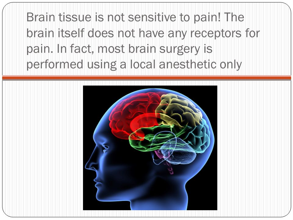 Brain tissue is not sensitive to pain