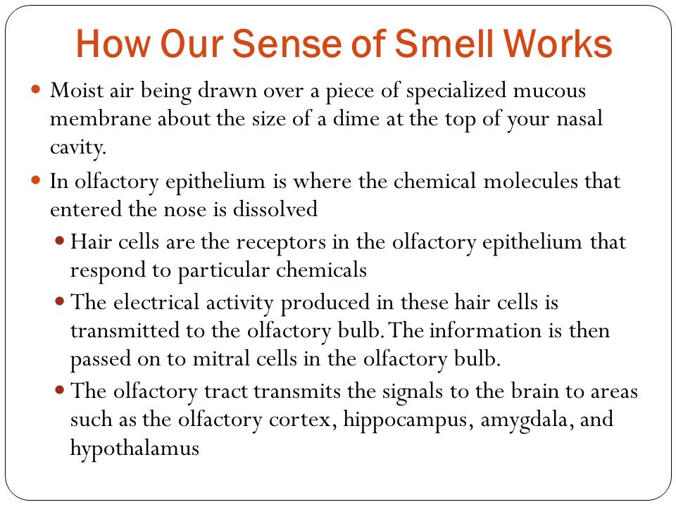 How Our Sense of Smell Works