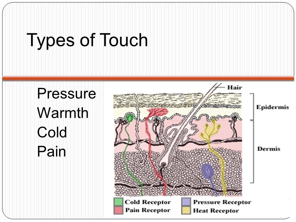 Types of Touch Pressure Warmth Cold Pain