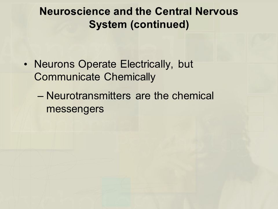 Neuroscience and the Central Nervous System (continued)