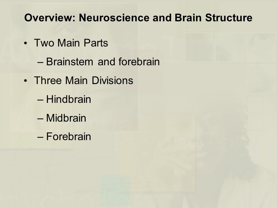 Overview: Neuroscience and Brain Structure