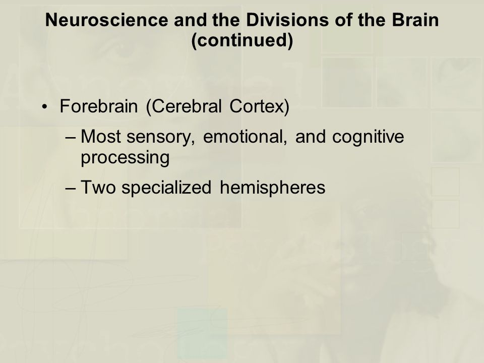 Neuroscience and the Divisions of the Brain (continued)